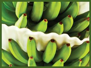productos-banano