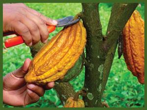 productos-cacao