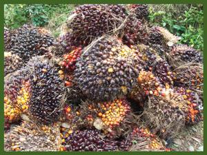 productos-palma